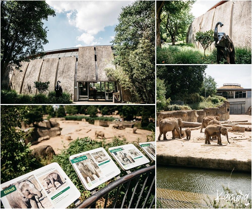 Trauung im Elefantenhaus des Kölner Zoo
